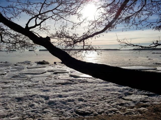 talvi8
